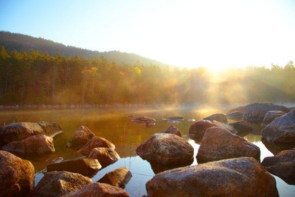 Los rayos del sol proveen de energía a un ecosistema.