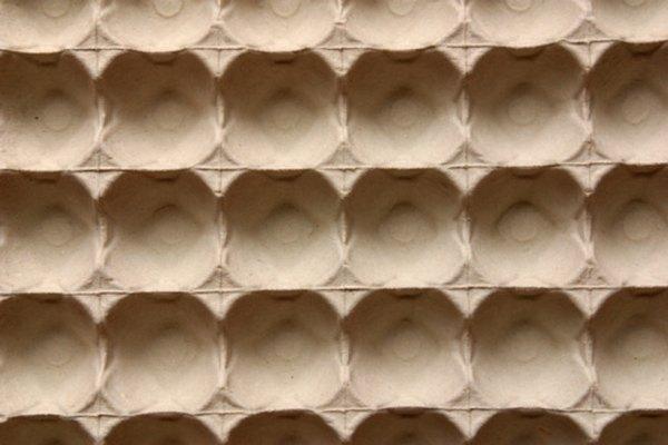 Los cartones de huevos pueden inspirar una variedad de artesanías de hormigas.