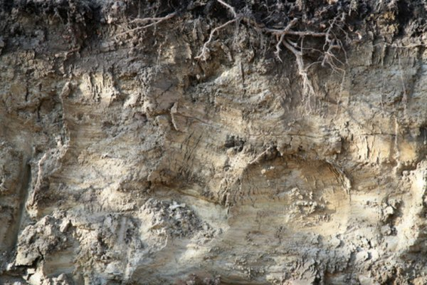 El perfil del suelo contiene la historia de su formación.