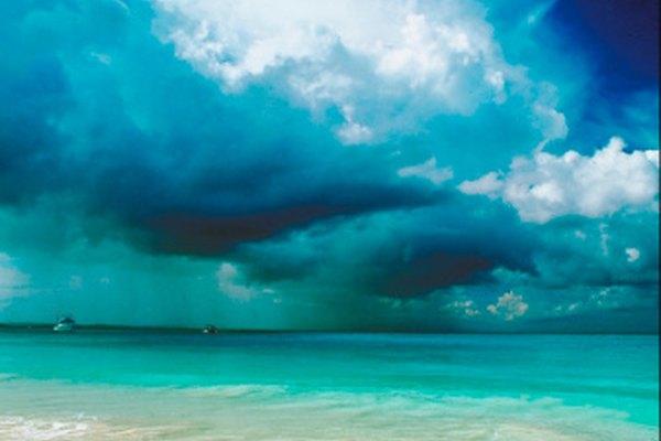 Cangrejos, mejillones, percebes y medusas pueden vivir cerca de la costa de una playa.