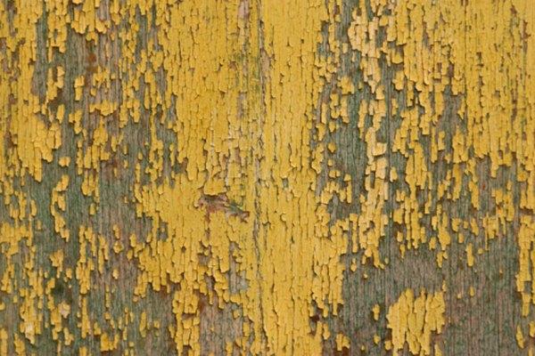 Los hongos son la clave de la descomposición de la madera.
