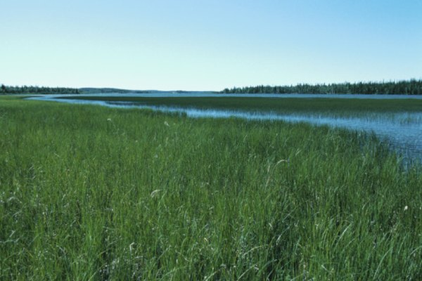 Las praderas se encuentran generalmente entre los bosques y los desiertos