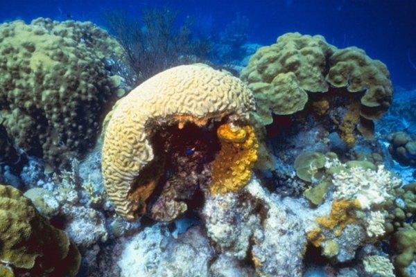 Las esponjas brindan un hogar para las pequeñas plantas marinas.