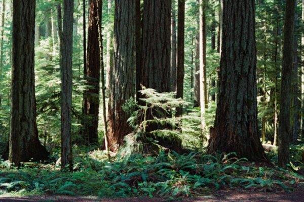 Las raíces del suelo de las plantas ayudan a aportarles nutrientes.