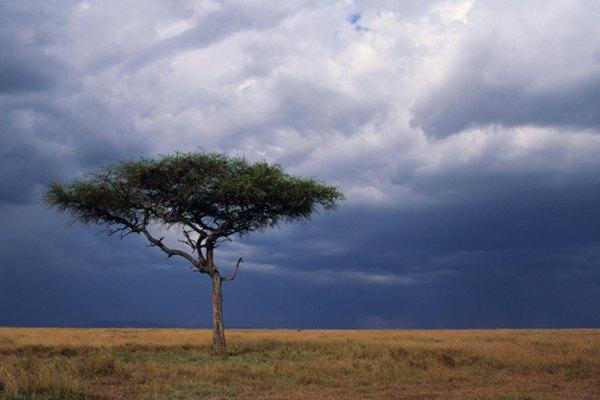 Las sabanas sufren de la contaminación de los automóviles y de las actividades agrícolas.
