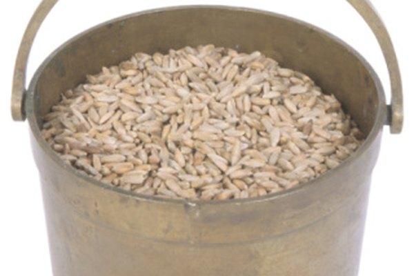 Los ácaros del moho a menudo infestan granos.