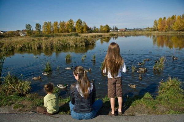 Los lagos están completamente rodeados por tierra.