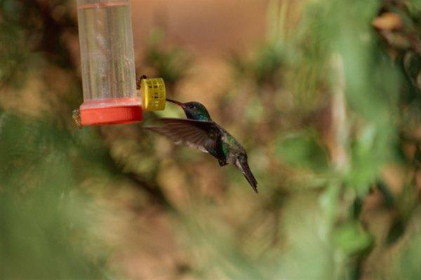 Mantén a las abejas fuera de los alimentadores de colibríes sin usar insecticidas peligrosos.