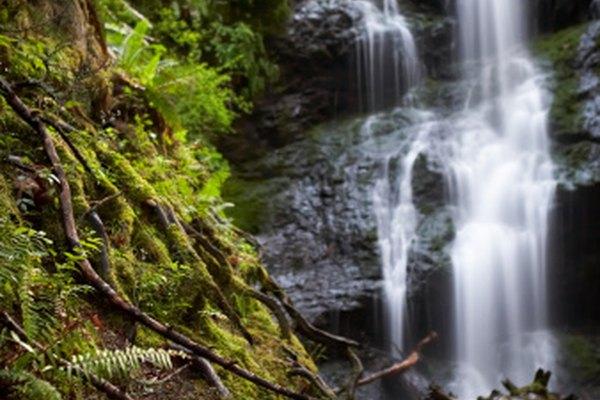 Los bosques templados son un paraíso para plantas y animales.