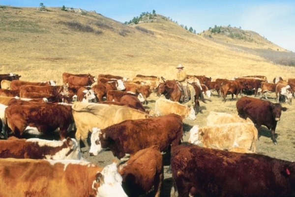 Un regalo para un ranchero debe ser grande y audaz.