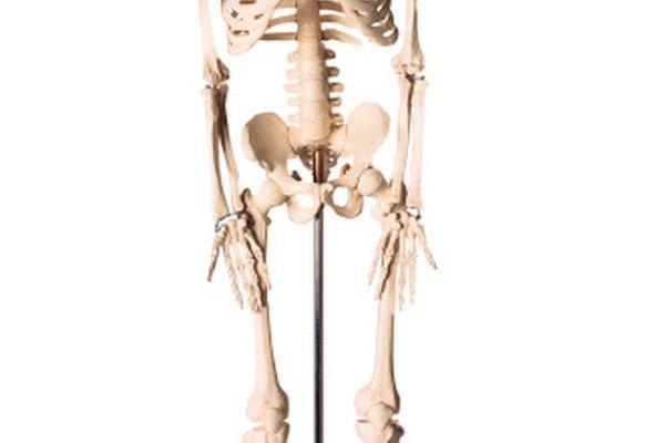 Los planos sagitales son mapas de ruta del cuerpo humano.