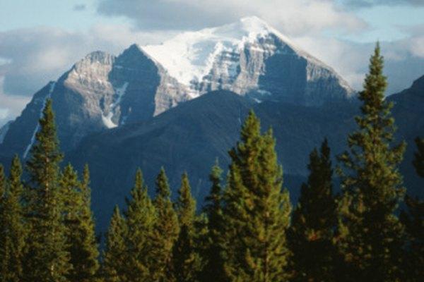 El bosque boreal se compone principalmente de coníferas.
