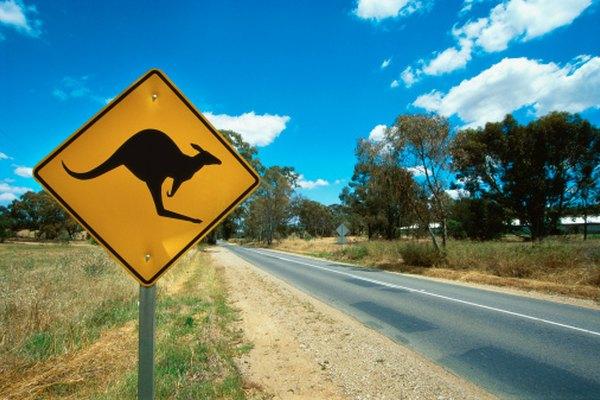 El interior de Australia es el hogar de la mayoría de los mamíferos marsupiales.