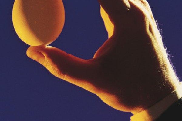 Sostén un huevo contra la luz para determinar si es fertilizado.