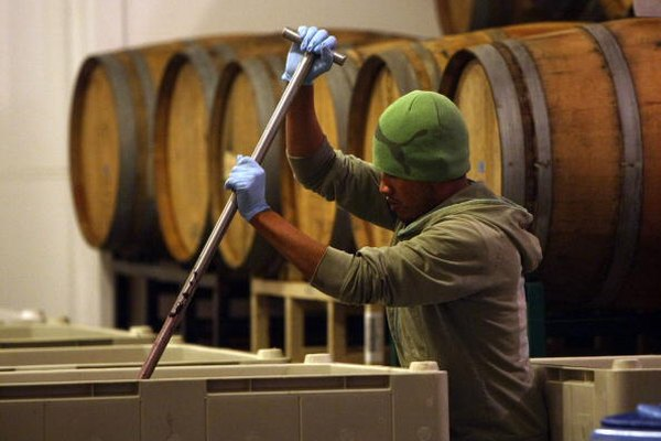 La fermentación llevada a cabo por la levadura durante la producción de vino es una forma de resperiación anaeróbica.
