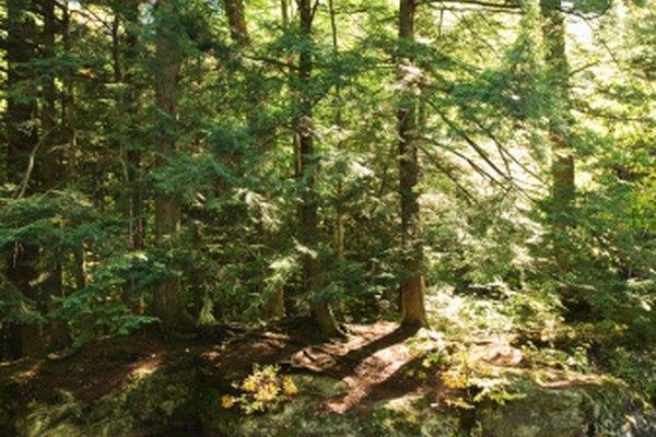 Los ambientes naturales se auto-mantienen a un cierto nivel; los humanos alteran drásticamente esa dinámica.