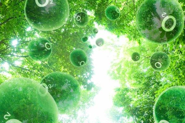 Las plantas producen el oxígeno que los animales necesitan respirar.