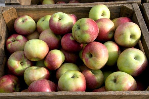 Las manzanas vienen en variedad de formas, colores y tamaños.