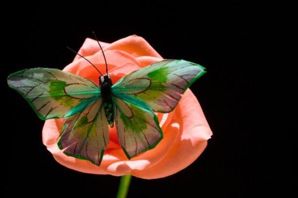 Las flores con colores brillantes atraen a los insectos para ser polinizadas.