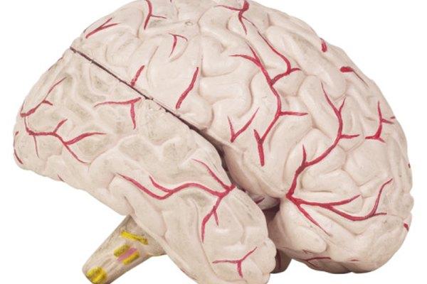 Carl Jung tenía muchas teorías sobre el cerebro.