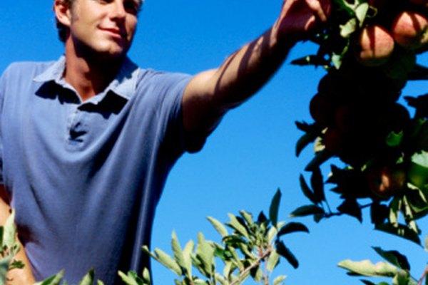 Los árboles frutales, como los manzanos, utilizan las flores para reproducirse.