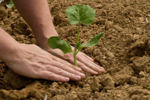 El suelo alimenta las plantas, y las plantas al suelo.
