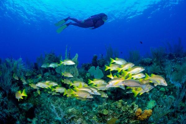Jacques Cousteau fue un buzo pionero, el primer explorador de la vida submarina.