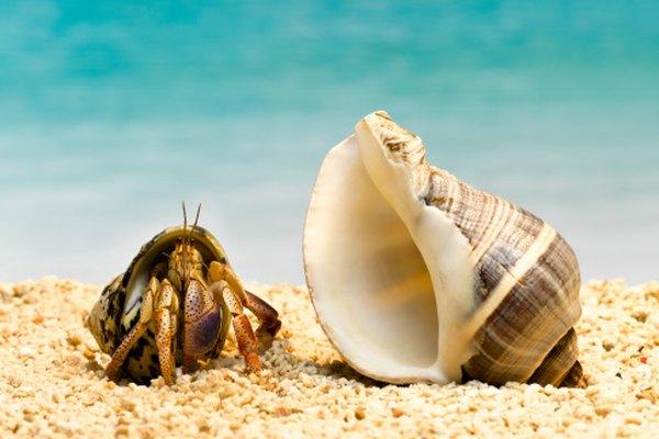 Cubierta o vacía, el material de la concha marina siempre resulta interesante.