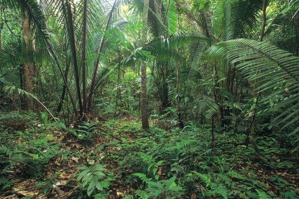 Las selvas tropicales contienen un ecosistema rico en plantas.