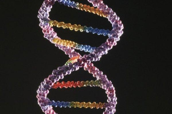 La compleja estructura del ADN puede descomponerse en tres unidades básicas.