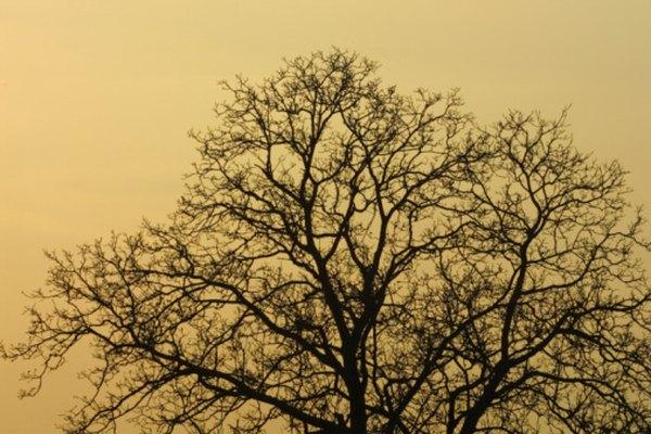 Las ramas extendidas de los árboles revelan un sinnúmero de conexiones geométricas.