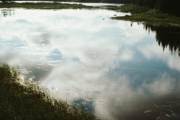 Reúne las larvas de mosquito de un estanque.