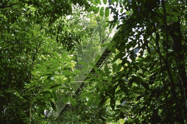 La exuberante vegetación de la selva tropical está bien adaptada a su medio ambiente.
