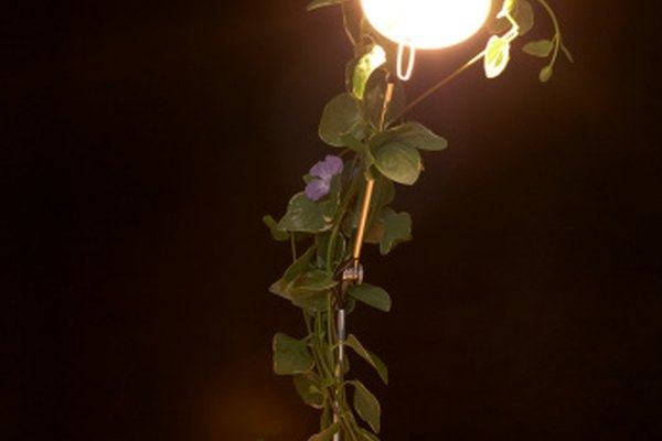 El brillo y la luminosidad son términos relacionados con la ciencia de la óptica.