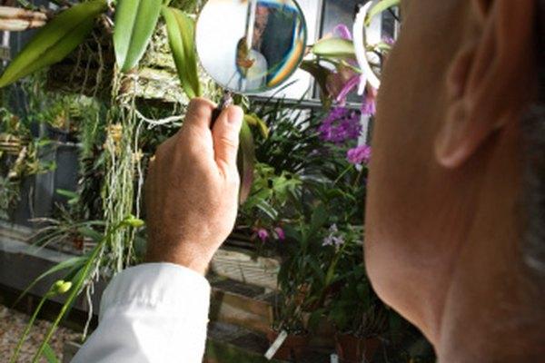 Una lupa es un ejemplo simple de una lente convexa.