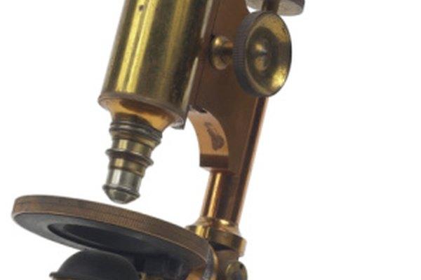 Los avances durante el siglo XIX establecieron los estándares para los microscopios ópticos modernos