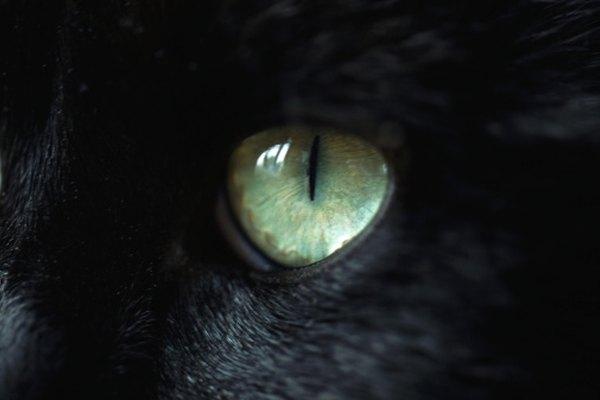 Algunos eruditos creen que la imaginería de esta frase se refiere a los gatos.