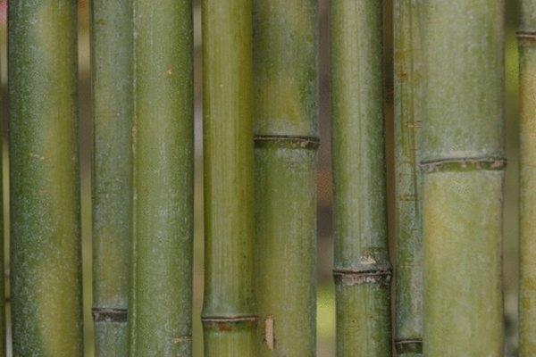El bambú tiene una superficie exterior encerada.