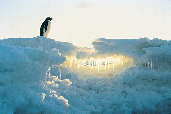 Antártida está cubierta en su mayoría por hielo, aunque tiene vida.