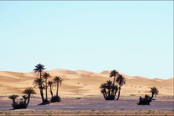 Los desiertos tropicales pueden contener oasis.