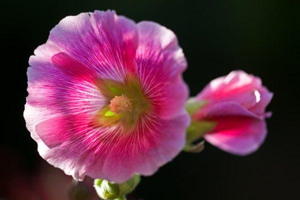 Los colores brillantes de las flores invitan a los polinizadores para recoger y transportar el polen.