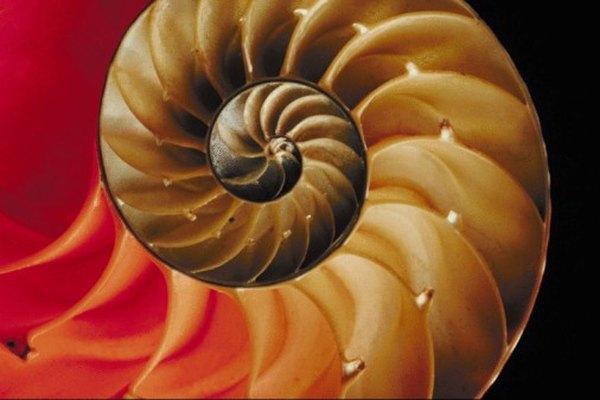El patrón en espiral de un nautilo refleja un patrón numérico increíble.