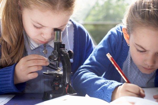 Los niños pueden usar un microscopio óptico para medir las células.