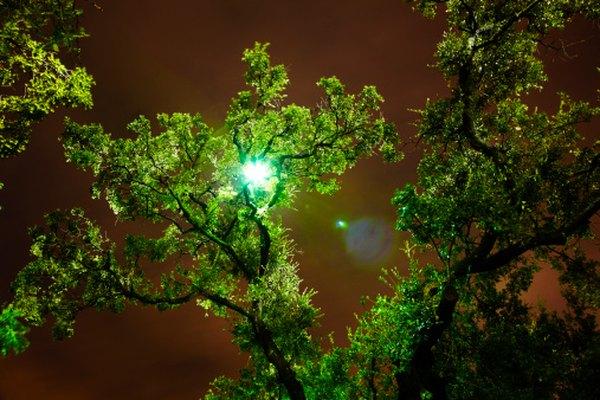 Los árboles y las plantas son un componente clave de muchos ecosistemas.