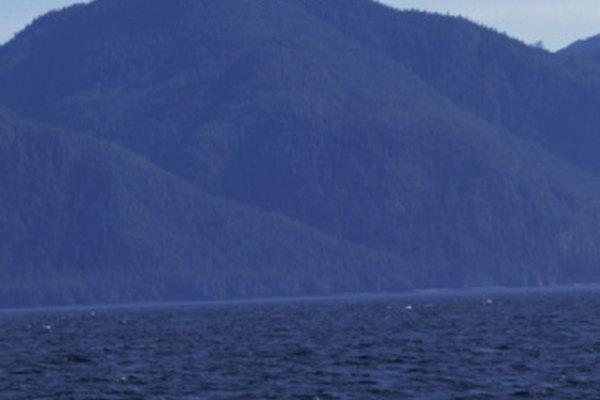Las ballenas son mamíferos que respiran aire y que se han adaptado a la vida marina.