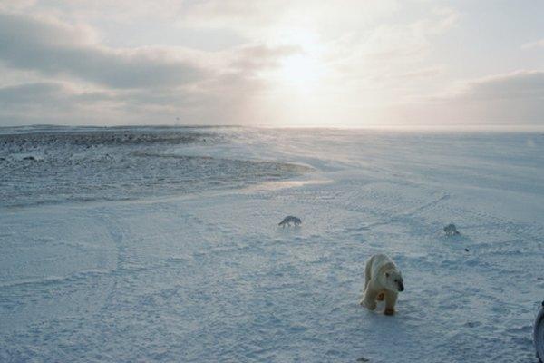 El clima de congelamiento de la Tundra.