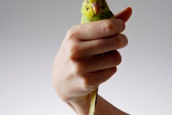Asegúrate de mantener las alas contra el cuerpo del ave.