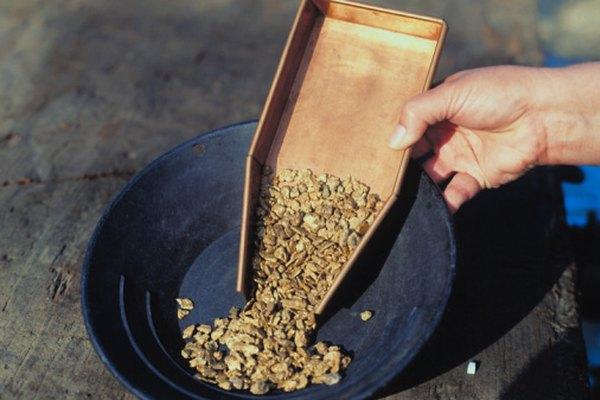 Encontrar pepitas de oro puede ser un esferzo divertido y fructífero.