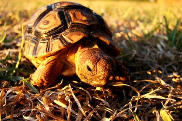 What Do Turtles Mean Spiritually Animals Mom