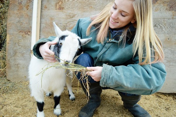 How to Use Ivomec Wormer in Goats | Animals - mom me